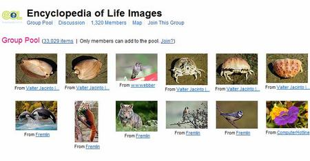 FlickrLifeImage.jpg
